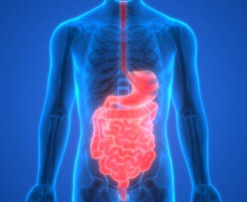 Human Digestive System Anatomy; blog: improve gut health